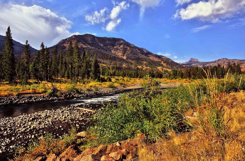 Wyoming Beauty