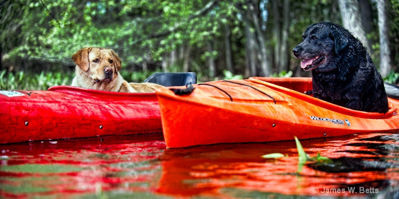 Ginger and Babe in Kayak
