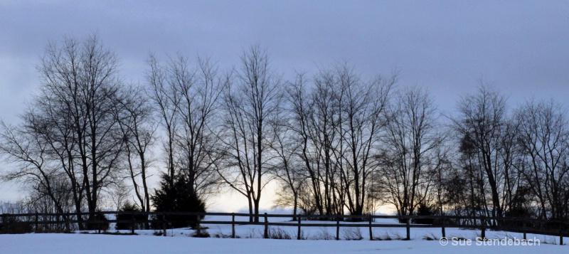 Winter Trees, Culpepper, VA