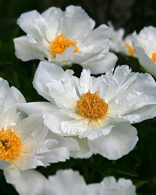 pretty in white 2