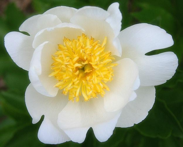 pretty in white 3