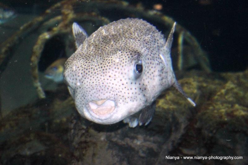 tennessee aquarium-20