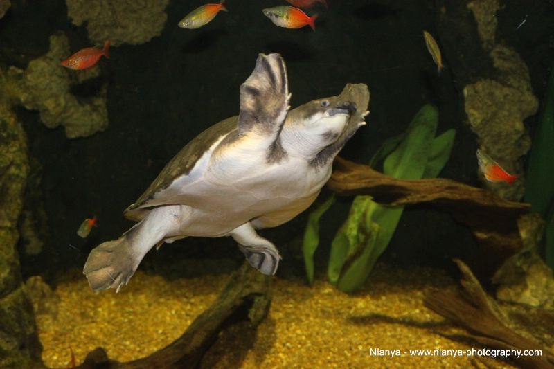 tennessee aquarium-26