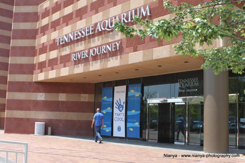tennessee aquarium-36