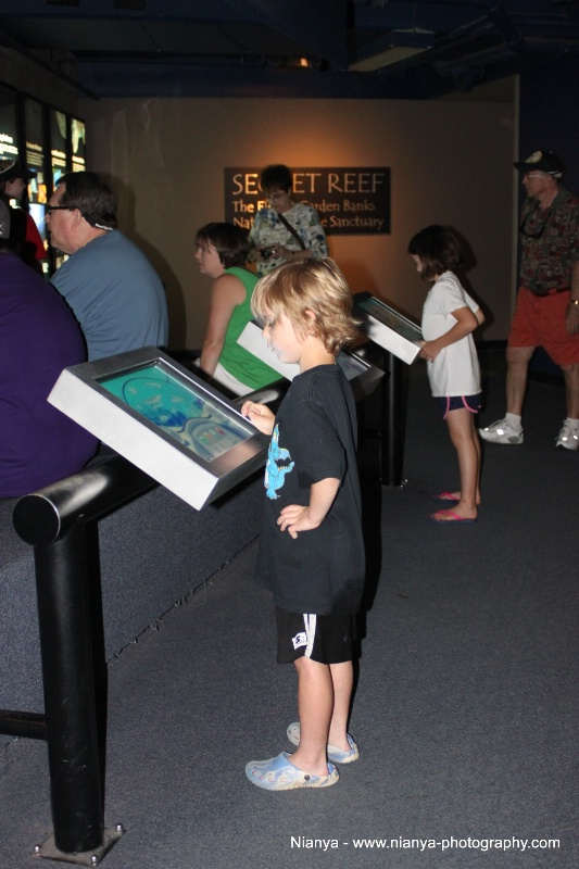 tennessee aquarium-46