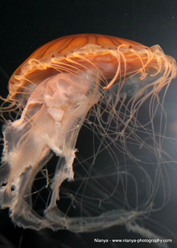 tennessee aquarium-47