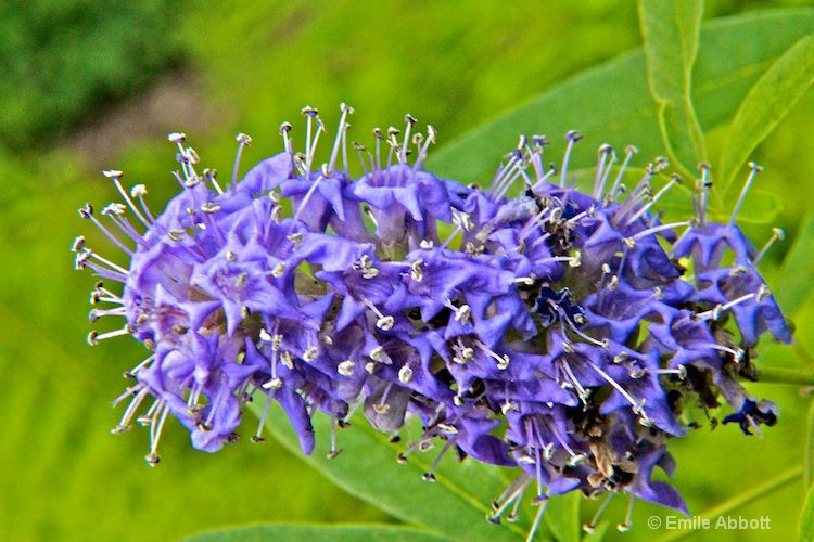 "Vitex  ""No bugs allowed"""