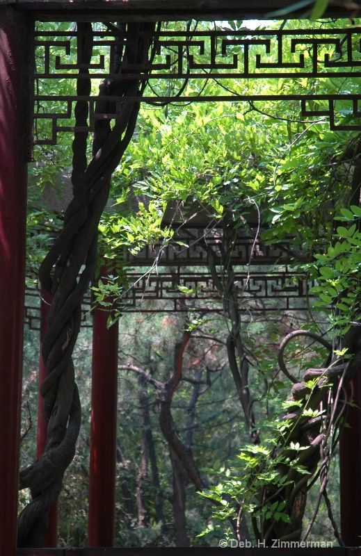 Light through the vines at Purple Bamboo Park