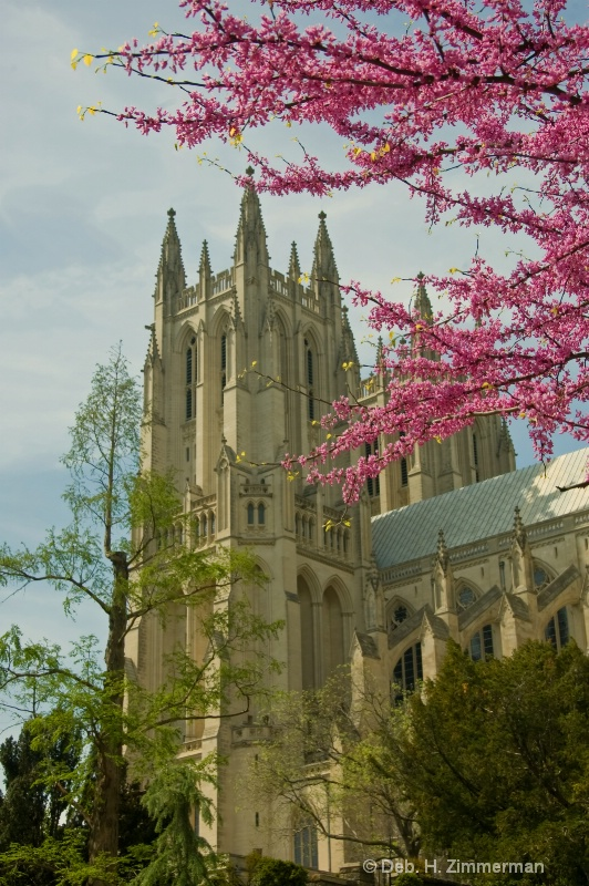 Spring color at the Cathedral