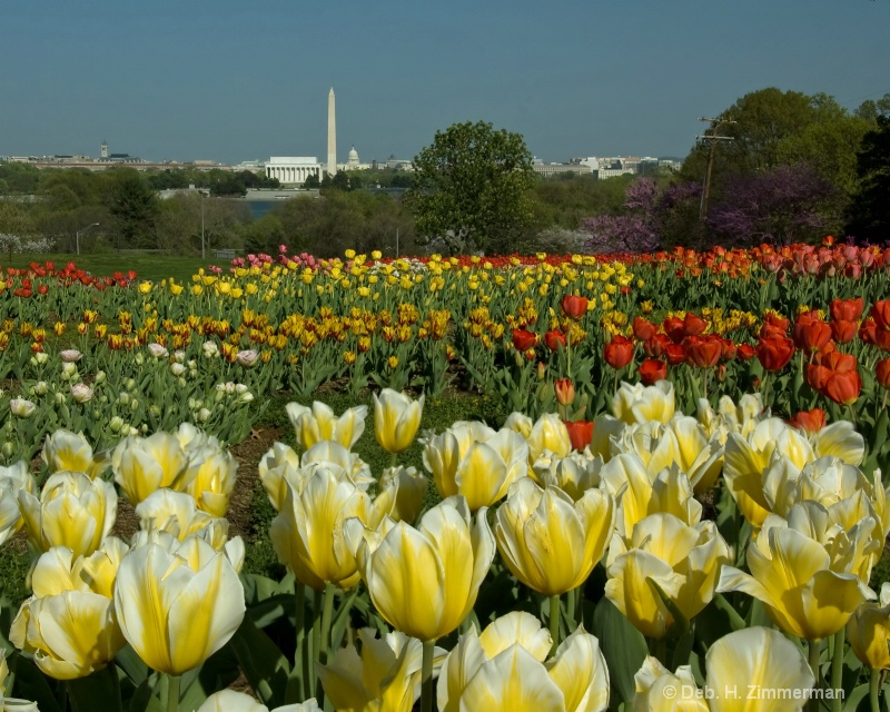 DC from the Carillon in bloom