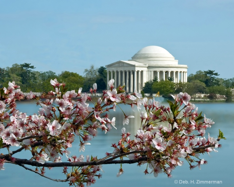 Cherry blossoms and the Jefferson