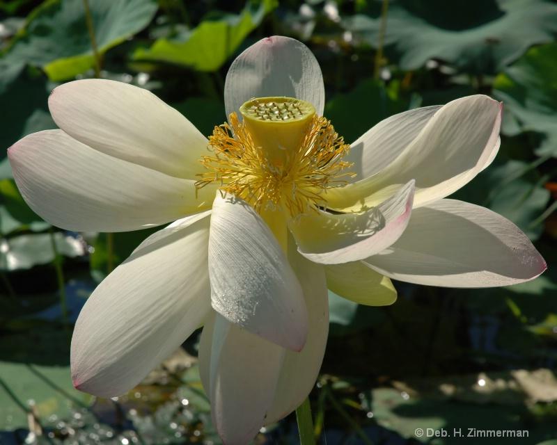 flowing white lotus petals