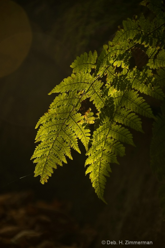 Fern in the spotlight