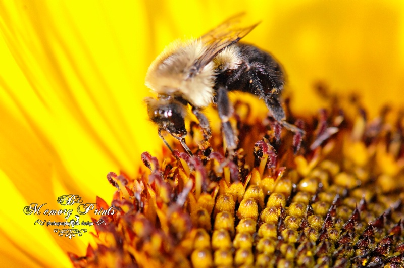 """Pollen 2"""