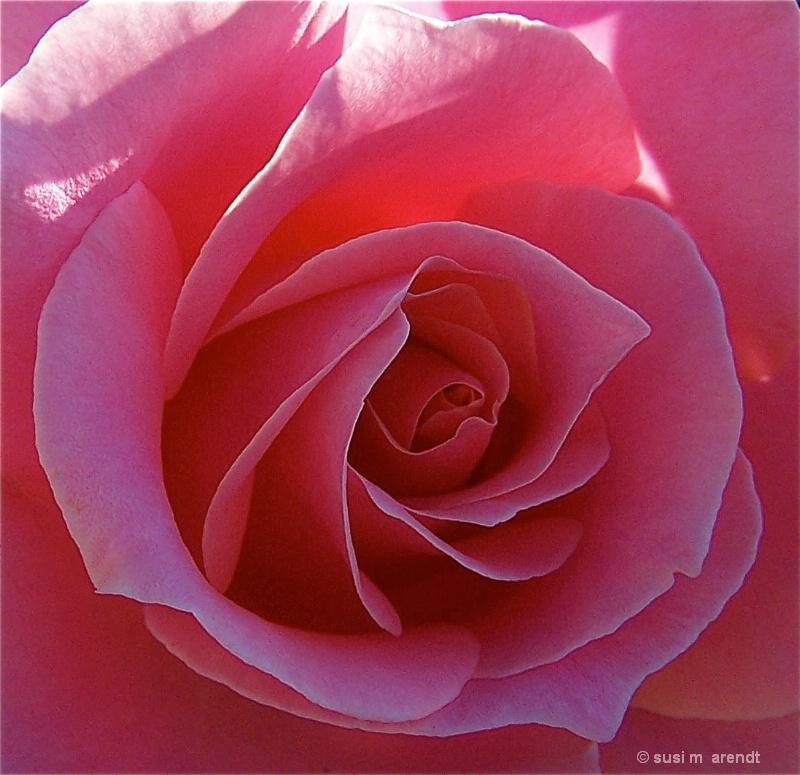 Alley Rose