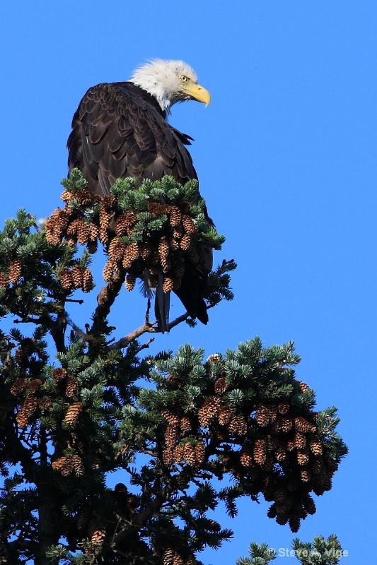100 0867-homer-eagle-06-ss