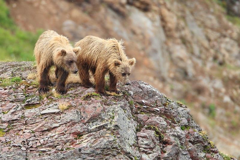 163j0262-homer-katmai np bears