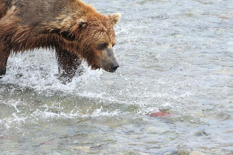 163j0581-homer-katmai np bears