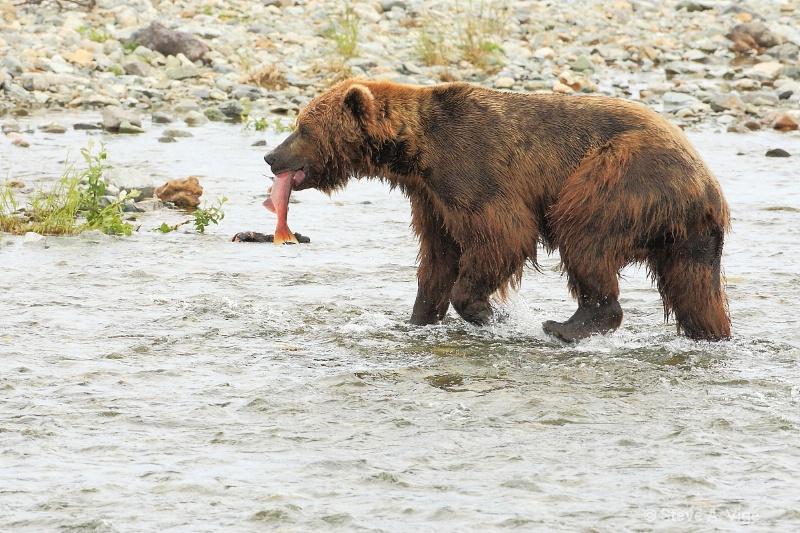 163j0702-homer-katmai np bears