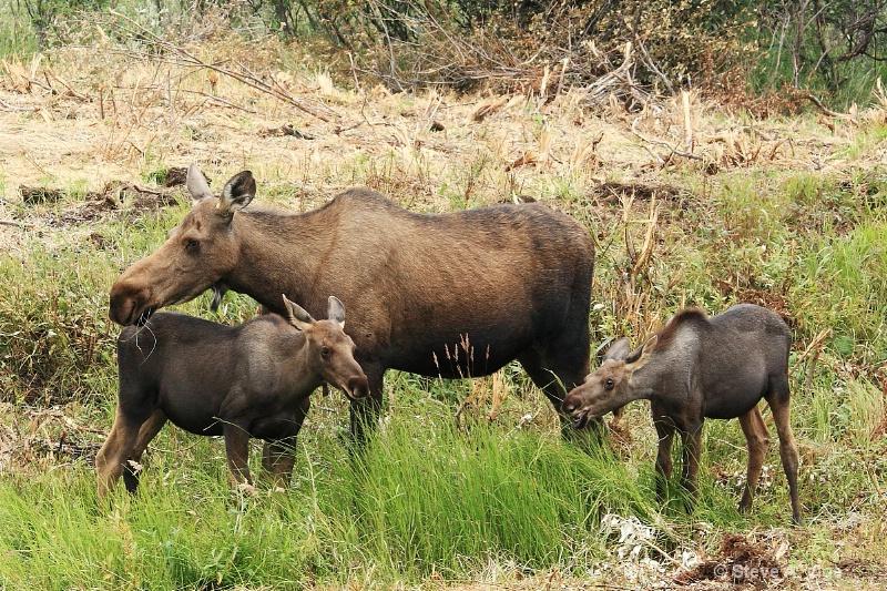 163j1111-moose-female-10-ss