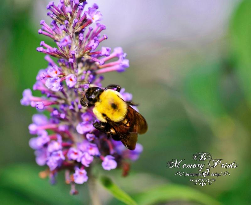 """""""Bee Back"""""""