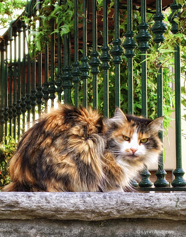Kitty in Varenna, Italy