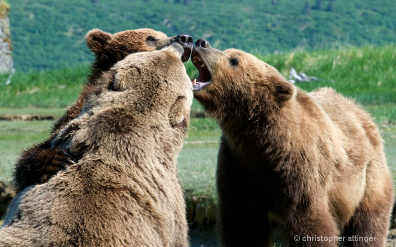 DSC_1863 Bear conference