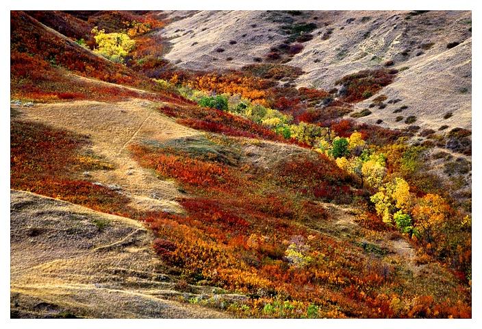 Autumn Coulee, Saskatchewan Landing PP