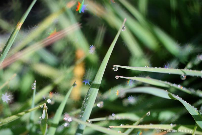 Grass Jewels I