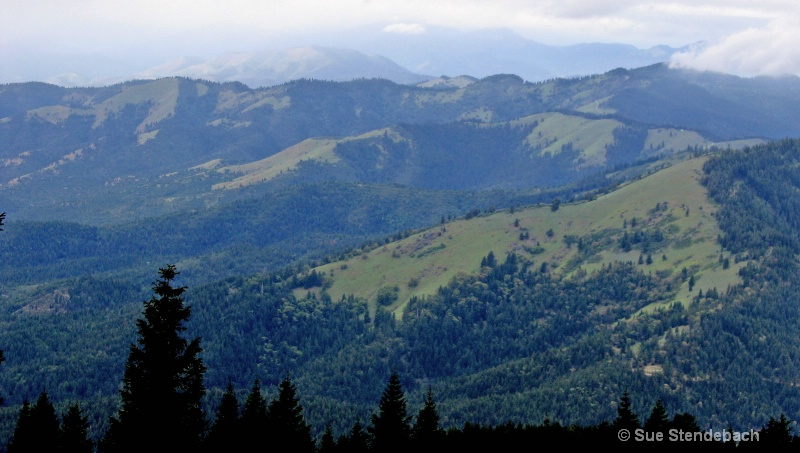 Recovery from Clearcutting, Wagner Butte Area, OR
