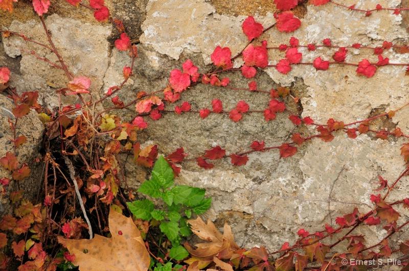 Urban Wall Flowers