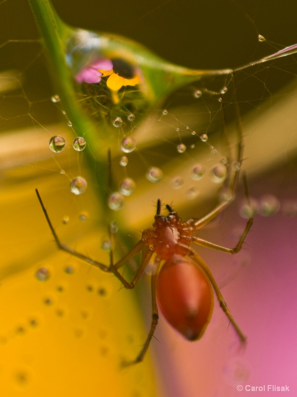 Come into My Web...