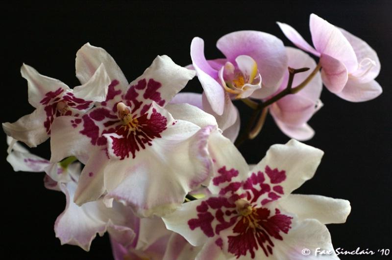 Orchids 2010