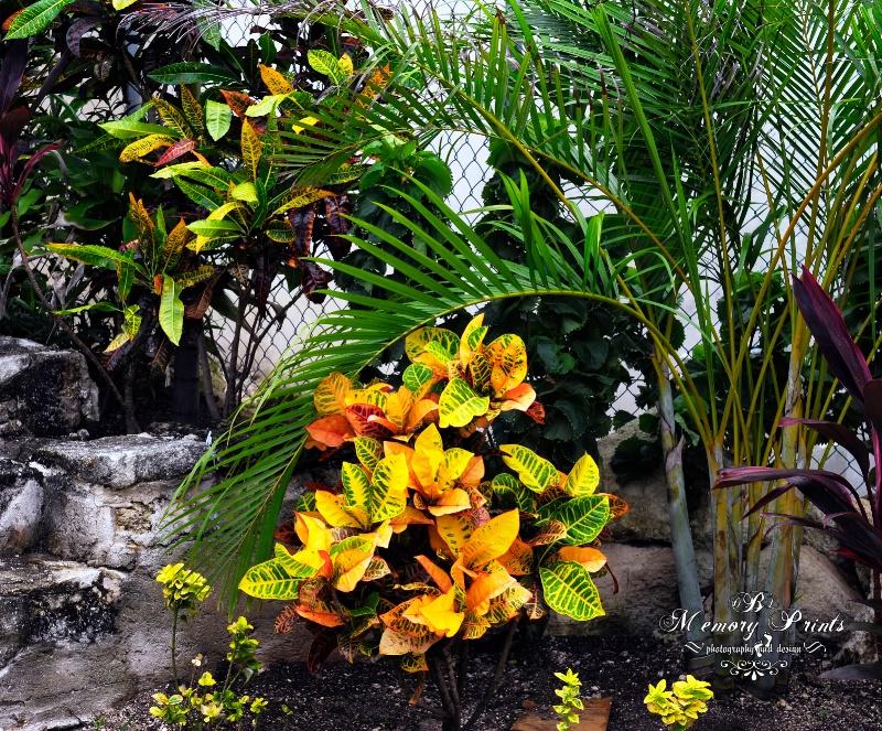 """Floral Beauty"""