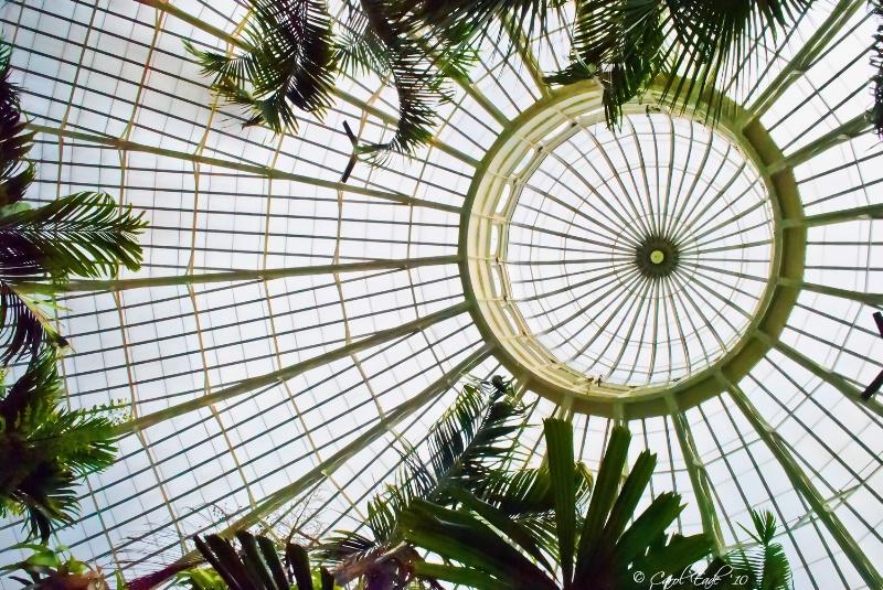 Palm Dome, Buffalo Botanical Gardens