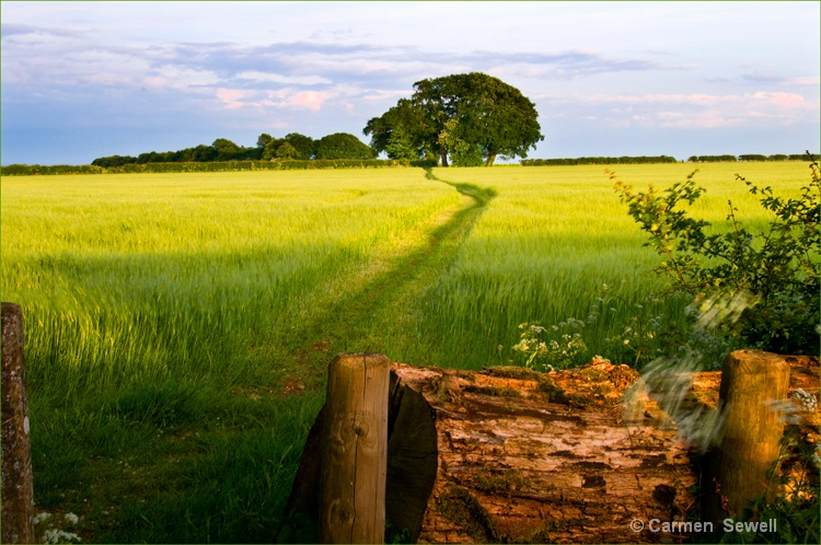 Footpath in Cotswolds