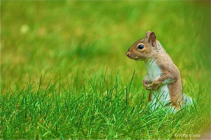 Little Squirrel in the Grass