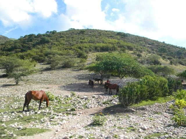 horses alongside the road