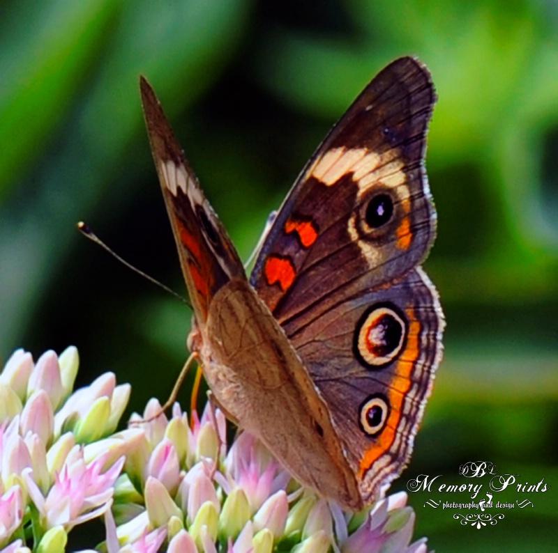 """The Flutter-Bye"""