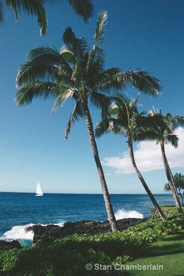 Three Palms & a Sailboat