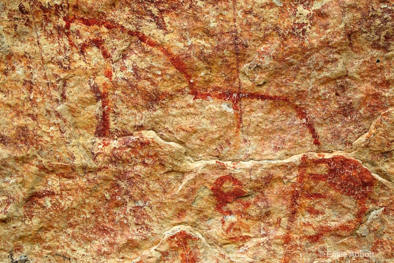 Close up of earliest drawing of a horse