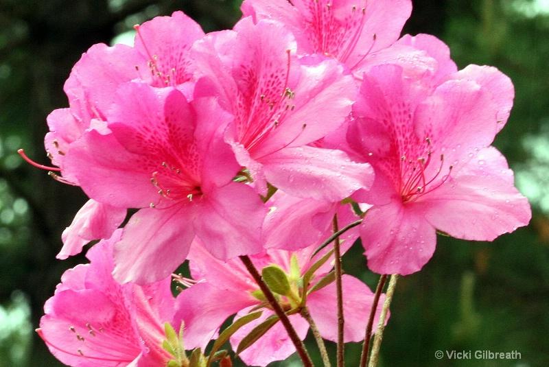 Glorious Pink