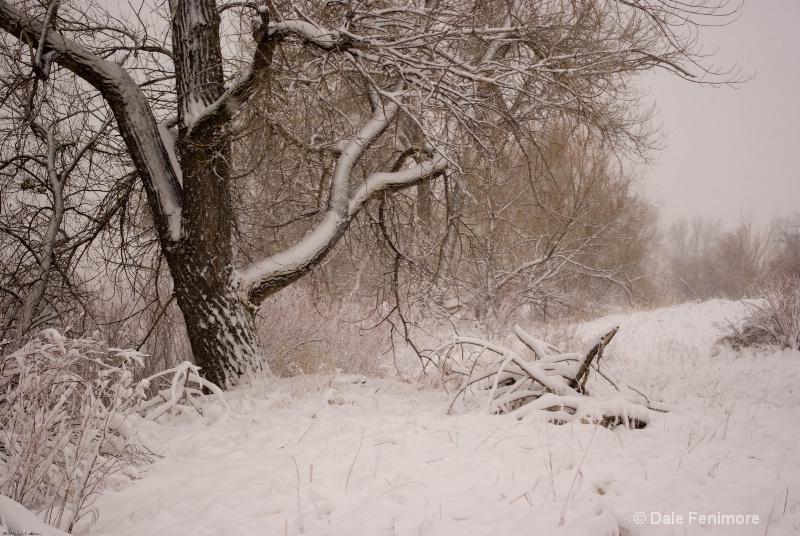 A Winter Scene 2