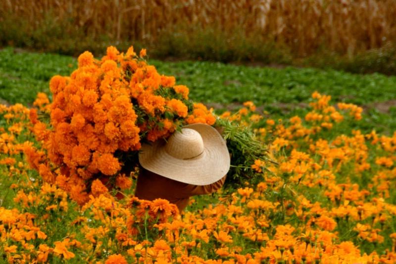 The Flower Carrier