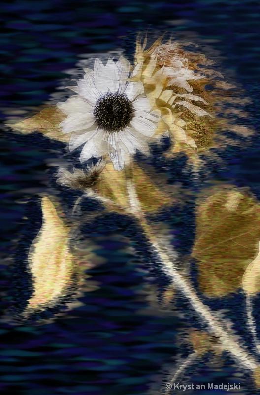 Sunny flower :)