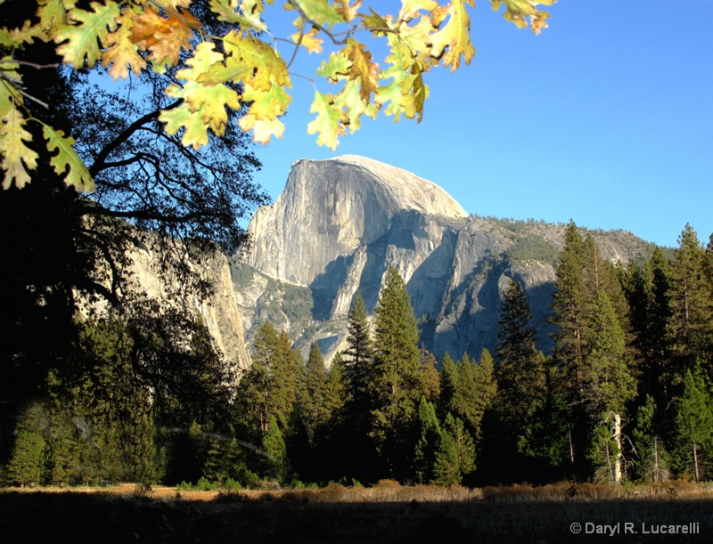 Half Dome Meadow View