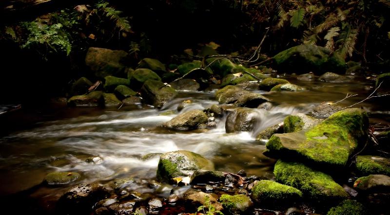 Scanlon creek