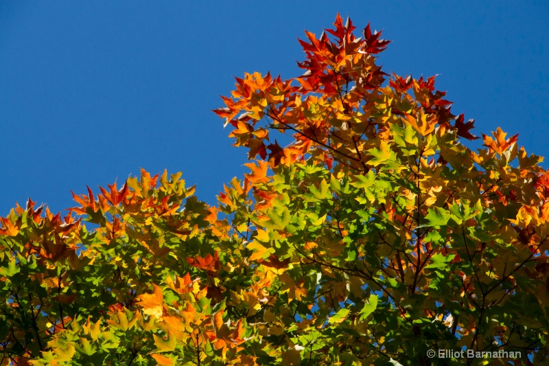 Autumn Colors 6