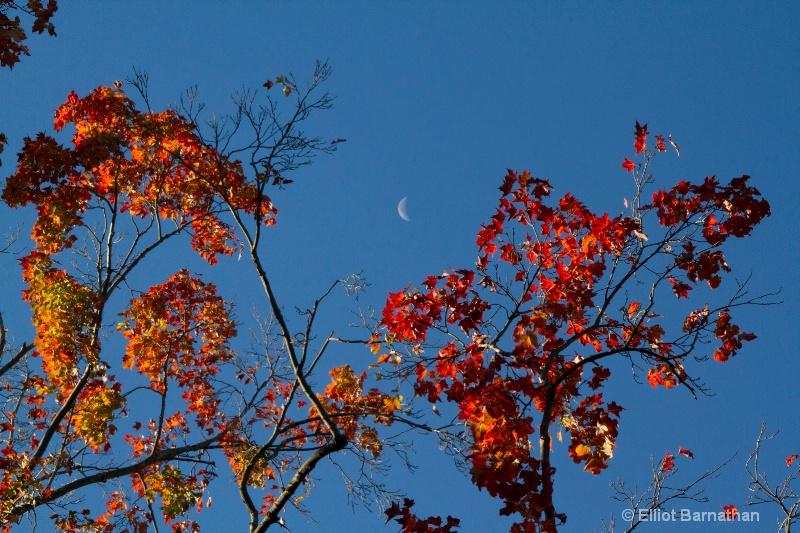 Autumn Colors 4