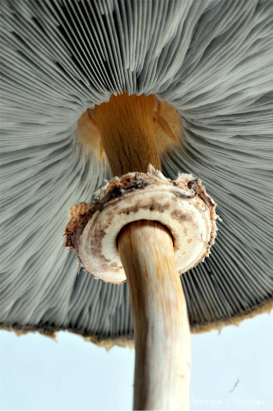 The Mushroom !